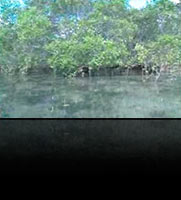 Mangroves And Wetlands
